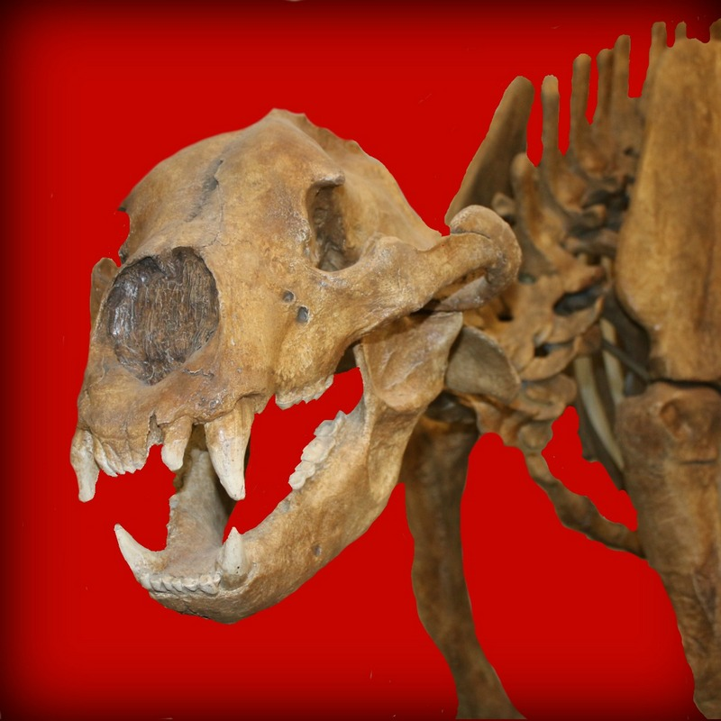 Cave Bear Lilly