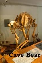 Cavebear 2
